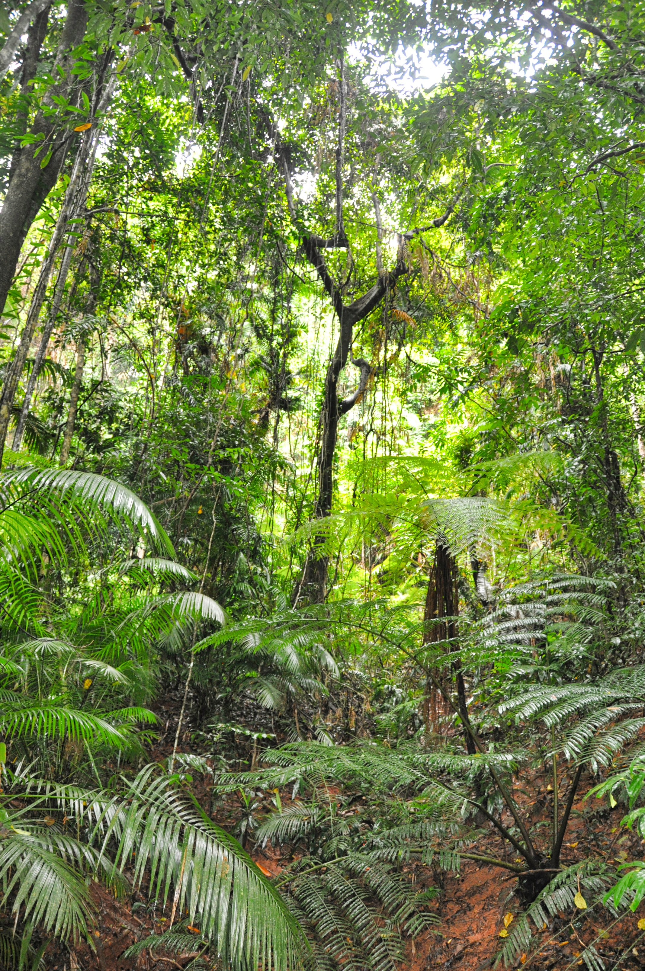 Two Travel The World  Daintree Rainforest Tours
