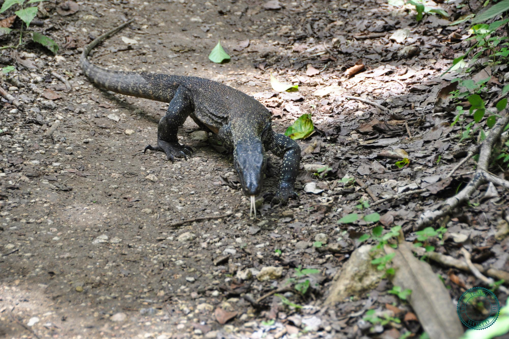Komodo Dragon Tour Cost