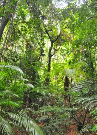 Two Travel The World - Daintree Rainforest Tours